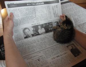 新聞のこと -