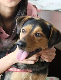 孫の愛犬は保護犬 - 写真で綴る日々