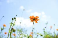 寒い日 - お花びより