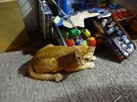 街角の猫ちゃん - 香港貧乏旅日記 時々レスリー・チャン
