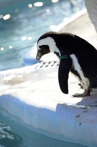 ペンギンだって♪ - お花びより