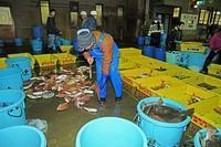 早朝の魚市場12015_01_25更新 - 夕陽に魅せられて・・・