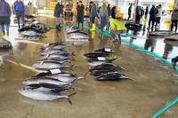 早朝の魚市場  22015_01_27更新 - 夕陽に魅せられて・・・