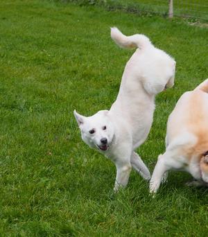収支報告・サンゴの事・新たな保護犬の事 - 十勝ドッグレスキュー・こっとんBOX 保護犬預かり日記