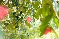つばきの木から - お花びより