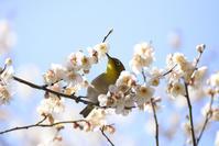 梅ごはん♪ - お花びより