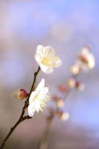 心が騒ぐ - お花びより