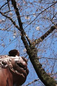 初!、桜とメジロ! - HAPPY to ...