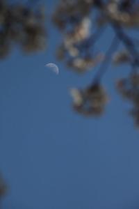 春の月 - HAPPY to ...
