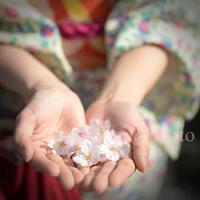 桜儚き - あ お そ ら 写 真 社