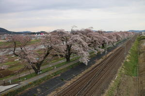 白石川堤「一目千本桜」&船岡城址公園の桜・花園・・・7 - 米沢より愛をこめて・・