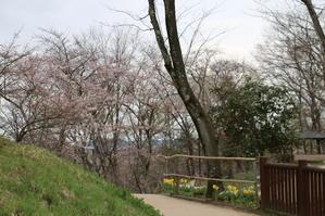 白石川堤「一目千本桜」&船岡城址公園の桜・花園・・・9 - 米沢より愛をこめて・・