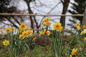 白石川堤「一目千本桜」&船岡城址公園の桜・花園・・・8 - 米沢より愛をこめて・・