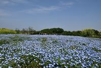 鼻高展望花の丘・2015春 - 楽しいことさがし3