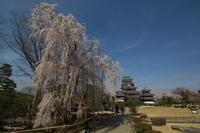 国宝松本城広角で・・・ - 光の贈りもの