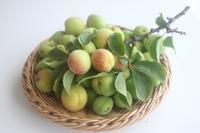 雨が上がっているあいだに、梅とフルーツ収穫へ - 自家製天然酵母パン教室料理教室Espoir3nさいたま市大宮