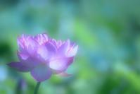 夢 - お花びより