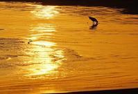黄昏の九十九里浜2015_07_16更新 - 夕陽に魅せられて・・・