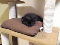チョコボのタワーでお昼寝注意報 - 晴れのちチョコ坊、にゃん歩日和!