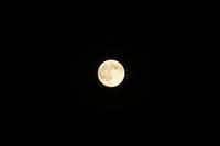 今宵の月 - お花びより