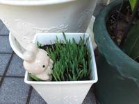 チョコボの猫草とお客さん - 晴れのちチョコ坊、にゃん歩日和!