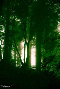 森への誘い - 光の贈りもの