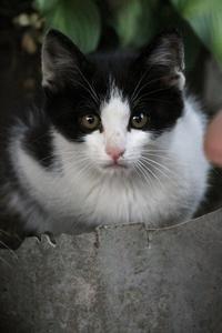 そこそこイケメン - Black Cat Moan