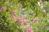 夏の花 - お花びより