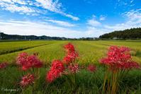 田園風景 - 光の贈りもの