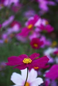 鼻高展望花の丘・2015秋 - 楽しいことさがし3
