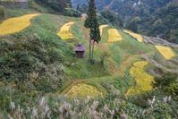 収穫の秋@松之山 - デジカメ写真集
