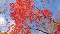 自然の色は美しい - そばやの娘の話