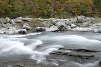 秋の渓流 - お花びより