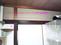 チョコボは高いとこずき - 晴れのちチョコ坊、にゃん歩日和!