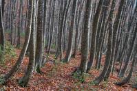 晩秋の美人林 - デジカメ写真集