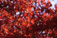 紅葉散策 - photoな日々