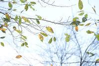 10月12日の写真 - お花びより