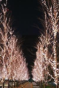 美しい錯覚 - 赤煉瓦洋館の雅茶子