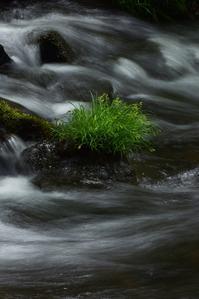 5月水の流れ - 光画日記