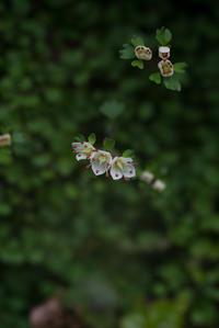 ハナネコノメが咲いたよ 〜 日影沢 ~ ①2016年3月6日(日) - 光の贈りもの