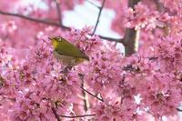 春の目覚め - あ お そ ら 写 真 社