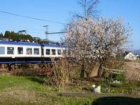藤田八束の鉄道写真@今年も春が来た、梅の花が満開そして桜の便りが聞かれる季節の到来 - 藤田八束の日記