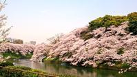 第5回音の貝合わせ 千鳥ヶ淵の花筏、上野の桜吹雪、なんだかそれは花見日和なんだ - 鴎庵