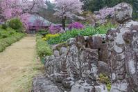龍珠院の春@あきる野市 - デジカメ写真集