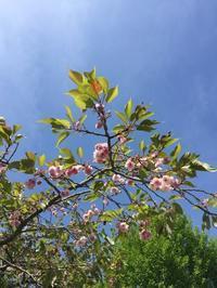 5/19(土)気仙沼へ - マコト日記