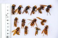 ハチトラップ - デジカメ写真集