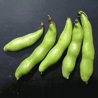 野菜主義/そら豆スープもいける - 鯵庵の京都事情