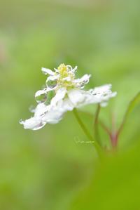 魔法 - お花びより