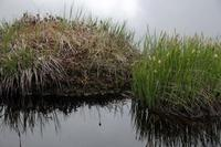 露点を越えた湿原 - tabi & photo-logue vol.2