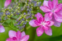 うちの庭の花たち - デジカメ写真集